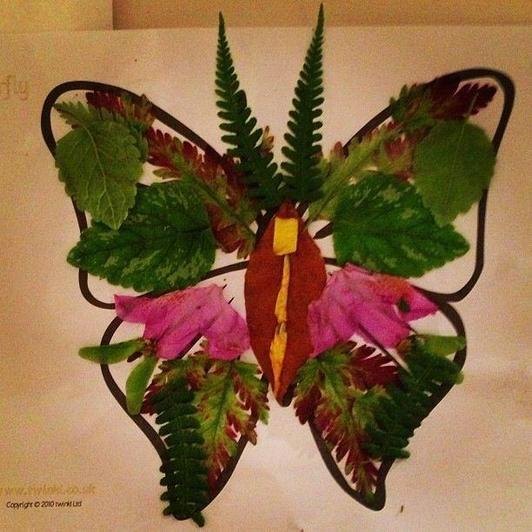 Nature butterfly (14)