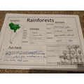 Dylan's been learning about the rainforest!