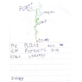 Plant writing!