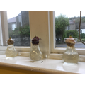 Monday Club gave us hyacinth bulbs to grow.