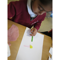 We learnt about the parts of flowering plants.