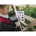 Kaidi spotted a ladybird and identified its type.