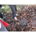 We found some worms, snails and slugs.