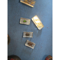 We looked at some beetles and invertebrates very closely.