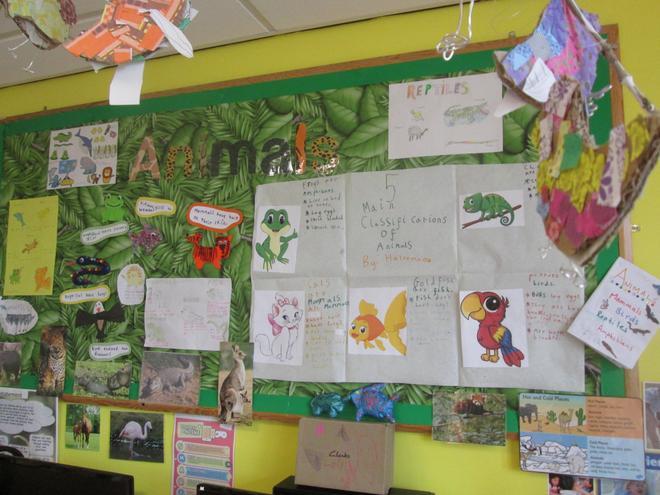 Our amazing animal homework!
