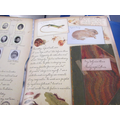 Some of Beatrix's drawings of her animals.