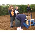 P6/7 were using their measuring skills