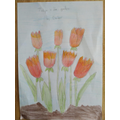 Beautiful drawing of tulips by Dexter