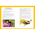 Kezia bumble bee facts - part 1.