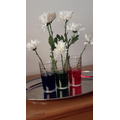 Oliver's flower and dye experiment - part 2.