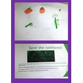 James' poster and life cycle of an acorn.