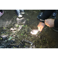 Bush Craft-making fires