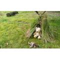 Can you make a den for a teddy?