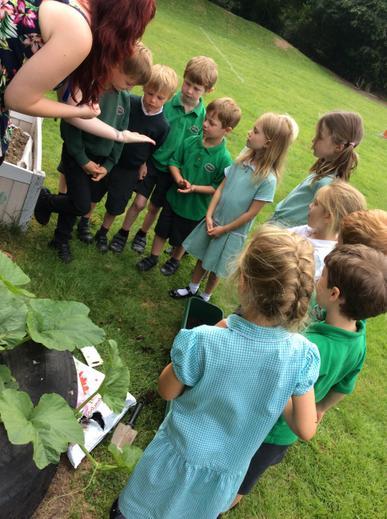 Gardening in Infant 2