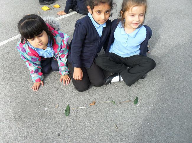 We made patterns using natural materials.