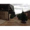 Methley Estate Christmas Trees