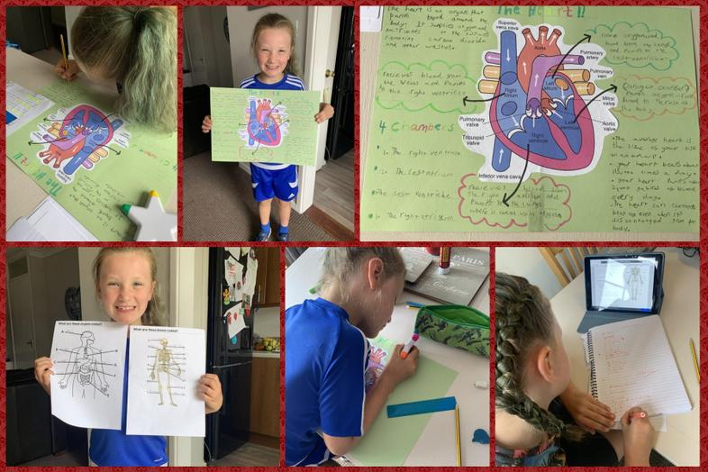 Lacie's work about the human body and the heart