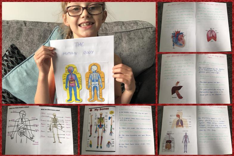 Ellie's amazing amount of work on the human body