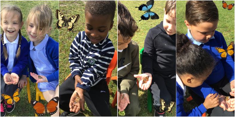 Releasing our butterflies!