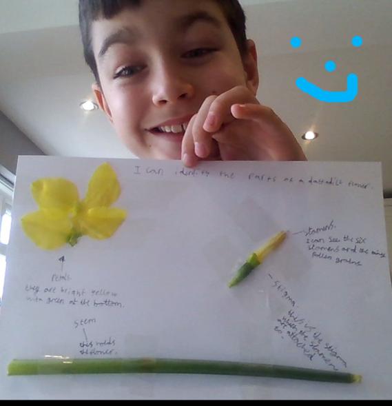 Fraser's fantastic flower dissection!