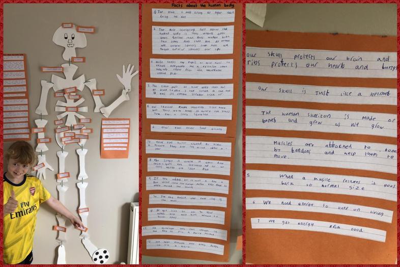 Kiera's fab display about the human body
