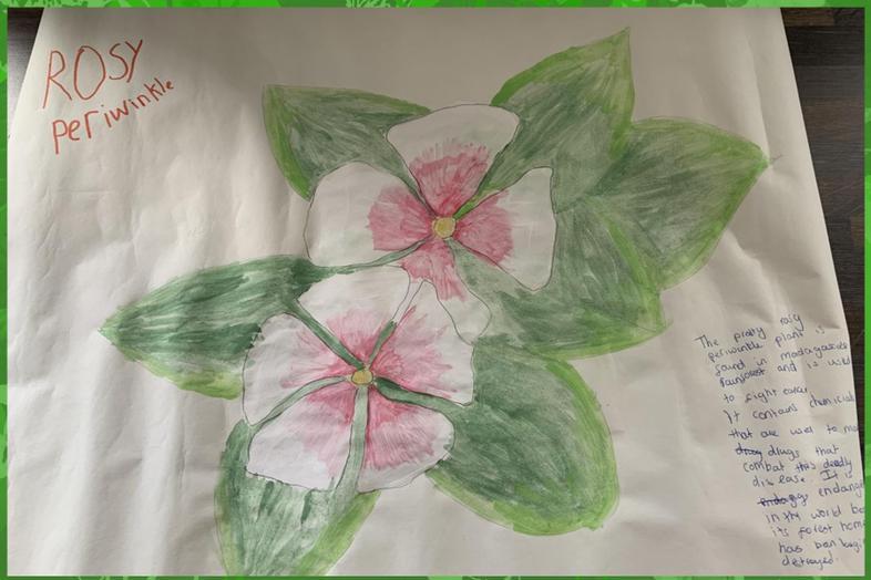 Rainforest plant art by Ethan