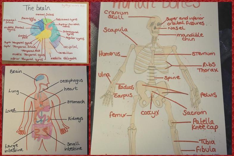 Rhys' work on the human body