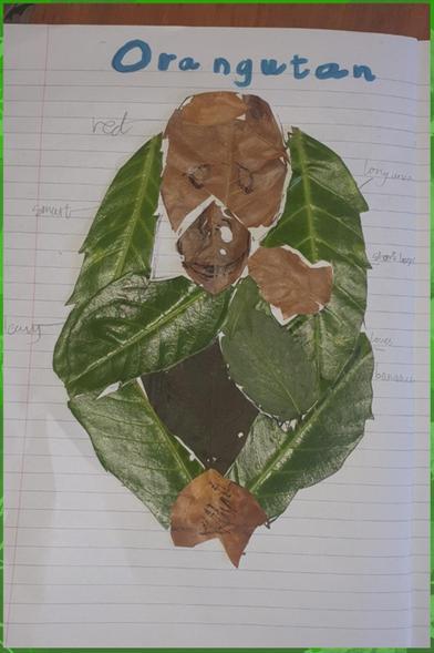 William's excellent orangutan fro leaves