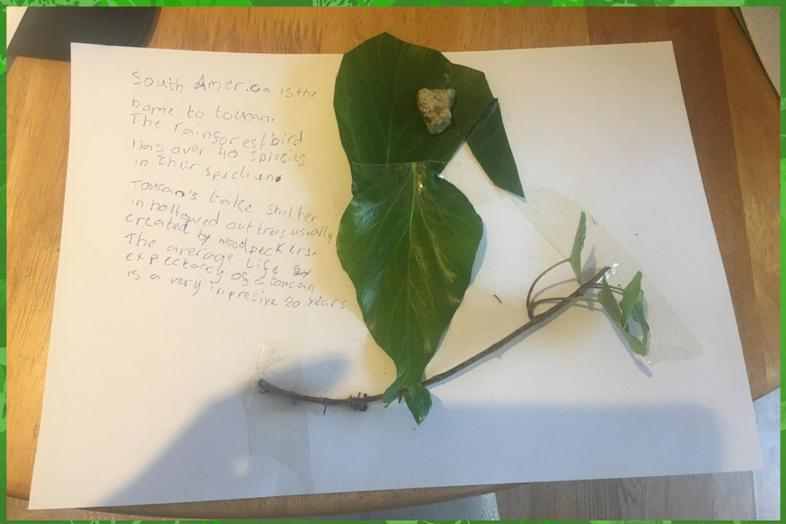 Alanna's awesome leaf-based toucan and facts