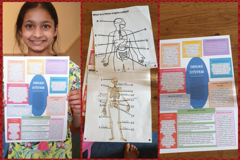 Shriya's excellent work about body systems