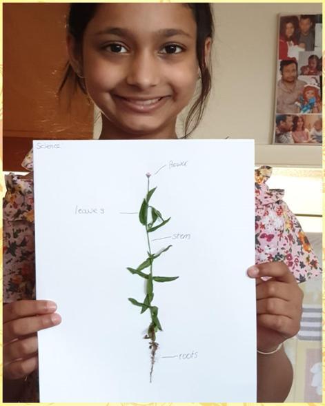 Shriya's leaf art with parts of a plant
