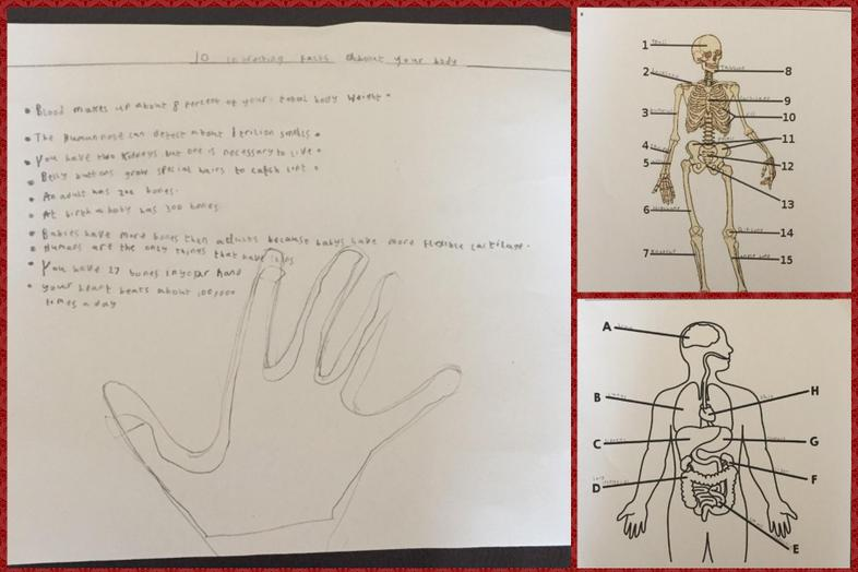 Lucas' facts about the human body