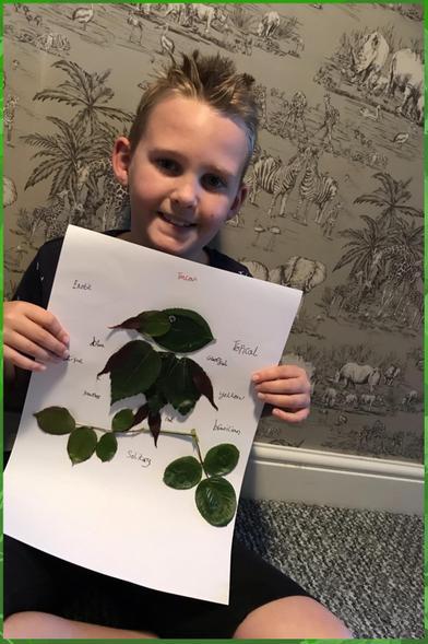 Oscar's excellent leaf-based toucan