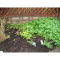 Maintaining our healthy garden