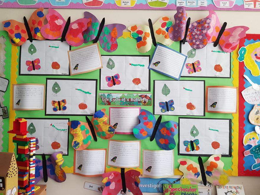 Reception: Life Cycle of a Butterfly