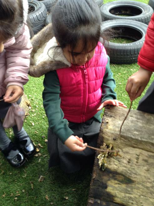 We used sticks to help us find spiders.