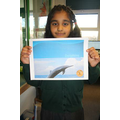 I made a non fiction book about dolphins.