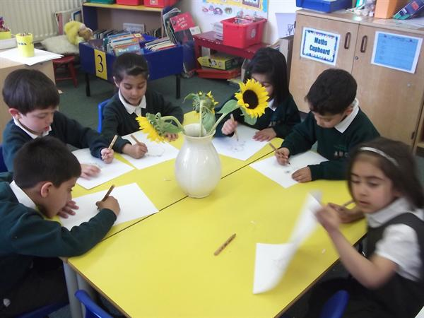 We are looking very carefully at the sunflowers...