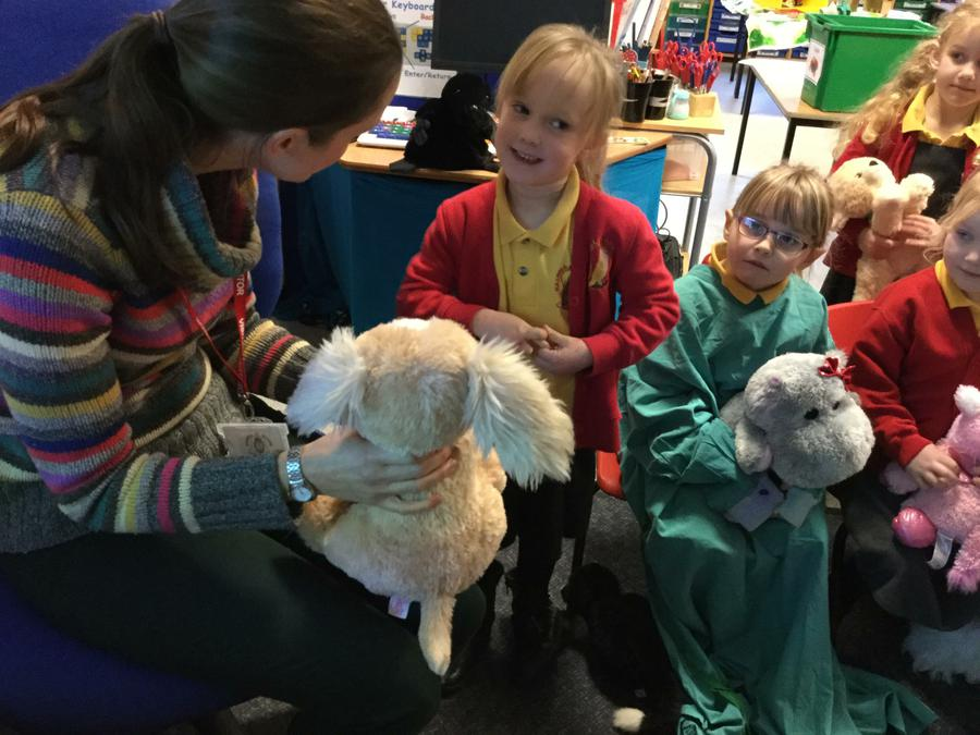 UTW - Treating our Pets