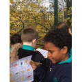 Naming common British trees in our school grounds