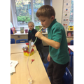 Investigating how a plant stem works.