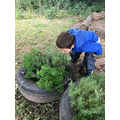 Smelling the Herb Tyres