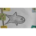 Josh W's fish