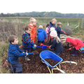 Then they collected the mulch in wheelbarrows.