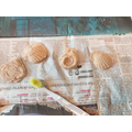 Isaac's plaster of paris fossils