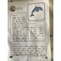 Bea's dolphin fact file