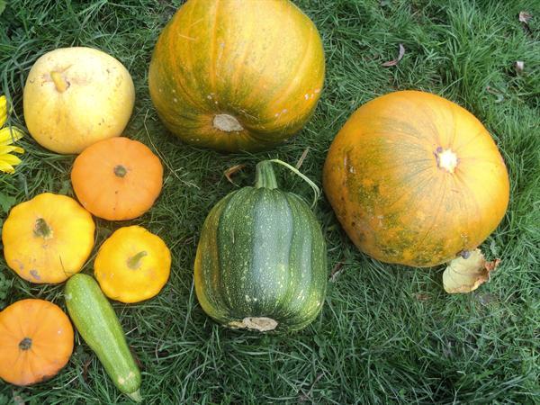 Wow....amazing pumpkins!