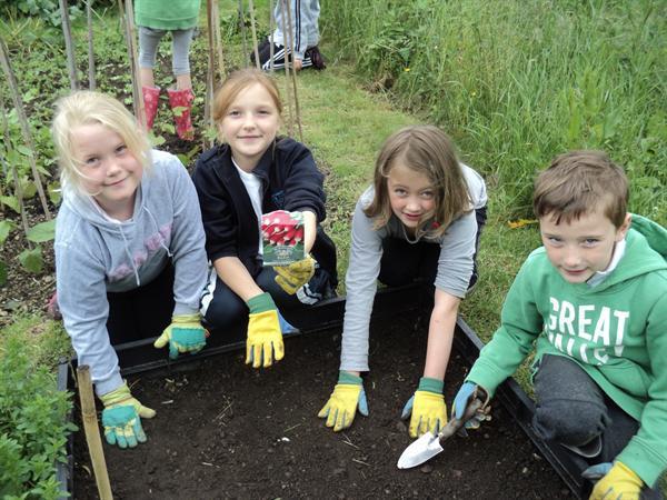 Planting radishes.
