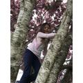 Fun climbing trees
