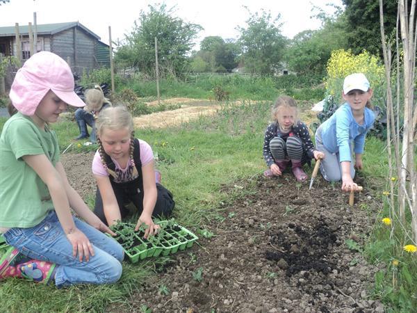 2013 Class 2 Planting peas